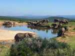 Camp Figtree & Addo National Elephant Sanctuary