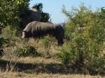 Kruger National Park. The Big Five
