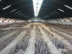 Xian and the Terracotta Army,